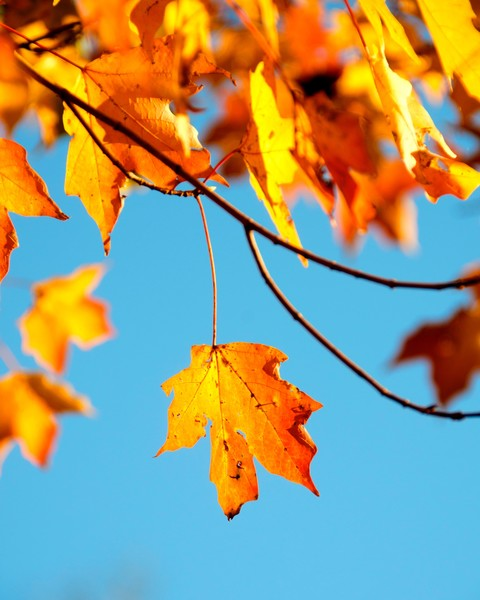 Fall Activities To Enjoy With Your Kids