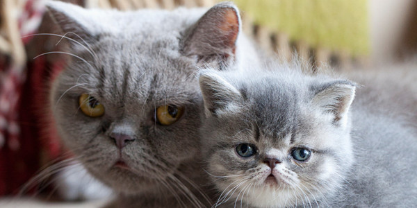 Animal Moms Looking Grumpy About Motherhood